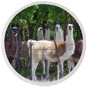 The Five Llamas Round Beach Towel