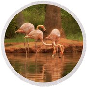 The Flock - The Serenity Of Flamingos At Water's Edge Round Beach Towel