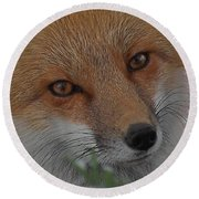 The Fox 4 Upclose Round Beach Towel