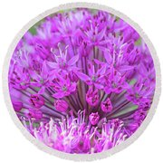 The Full Bloom Of Flowering Ornamental Onion Round Beach Towel