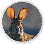 Golden Ears Bunny Round Beach Towel