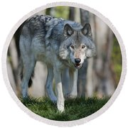 The Gray King... Round Beach Towel