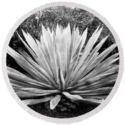 The Great Agave Round Beach Towel