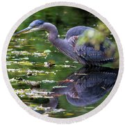 The Great Blue Heron Hunting For Food Round Beach Towel