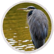 The Great Blue Heron Perched On A Tree Branch Round Beach Towel