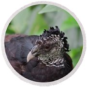 The Great Curassow 3 Round Beach Towel