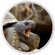 The Great Gopher Tortoise Round Beach Towel