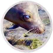 The Great Seal Round Beach Towel