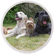 The Group Of Dogs Round Beach Towel