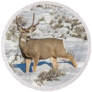 The Gtnp Mule Deer Buck Round Beach Towel