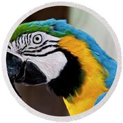 The Happy Macaw Round Beach Towel
