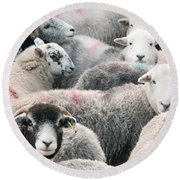 The Herdwicks Round Beach Towel