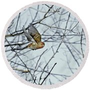 The House Finch In-flight Round Beach Towel