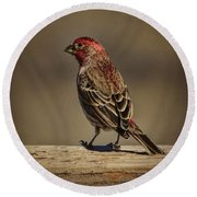 The House Finch Round Beach Towel