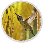 The Hummingbird And The Yellow Aloe  Round Beach Towel