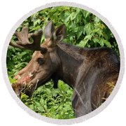 The Hungry Moose Round Beach Towel