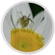 The Itsy Bitsy Spider Round Beach Towel
