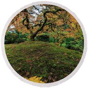 The Japanese Maple Tree In Autumn 2016 Round Beach Towel
