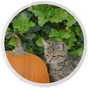 The Kitten And The Pumpkin Round Beach Towel