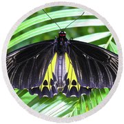 The Largest Butterfly In The World Round Beach Towel