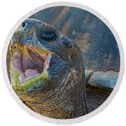 The Laughing Tortoise Round Beach Towel