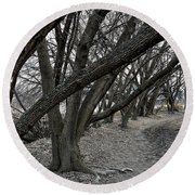 The Leaning Boughs Round Beach Towel