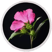 The Light Rose Of Sharon 2017 Square Round Beach Towel