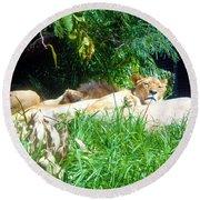 The Lion Awakes Round Beach Towel