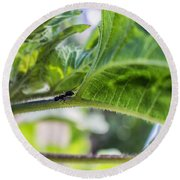 The Lone Ant Round Beach Towel