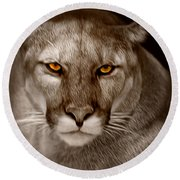 The Look - Florida Panther Round Beach Towel