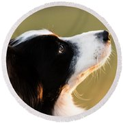 The Look Of A Dog Round Beach Towel