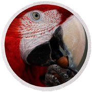 The Macaw Round Beach Towel