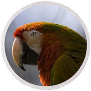 The Macaw Portrait Round Beach Towel