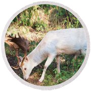 The Magical Deer 2 Round Beach Towel