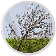 The More The Merrier- Tree Swallows  Round Beach Towel