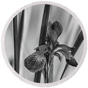 The Mystery Of Spring 2 Bw Round Beach Towel