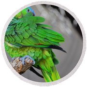 The Parrot Round Beach Towel