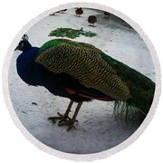 The Peacock In The Royal Garden In Winter Round Beach Towel