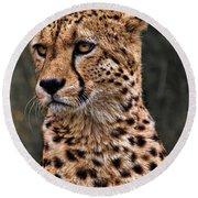 The Pensive Cheetah Round Beach Towel