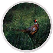 The Pheasant In The Autumn Colors Round Beach Towel
