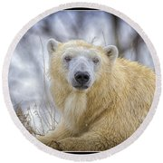 The Polar Bear Stare Round Beach Towel