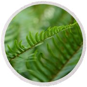 The Quiet Beauty Of Ferns Round Beach Towel