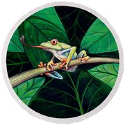 The Red Eyed Tree Frog Round Beach Towel