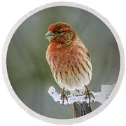 The Red Finch Round Beach Towel