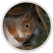 The Red Squirrel 4 Round Beach Towel