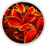 The Reds Of Winter Round Beach Towel