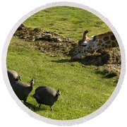 the Safari park Round Beach Towel