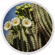 The Saguaro Cactus  Round Beach Towel