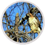 The Search Red Tail Hawk Art Round Beach Towel