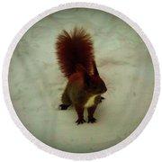 The Squirrel In The Winter Garden Round Beach Towel